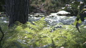 Green fern stock video footage