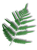 Green fern. A closeup illustration of a green fern on a white background Stock Photography