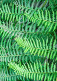 Green Fern Abstract Royalty Free Stock Photo