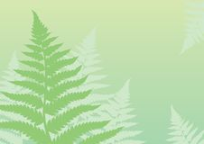 Green fern background. Memories of summer forest Stock Images
