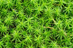 Green fern background Royalty Free Stock Photo