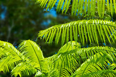 Green Fern Background. Royalty Free Stock Images