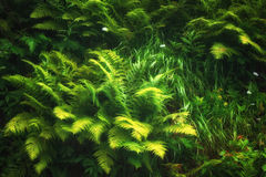 Green fern background Stock Images