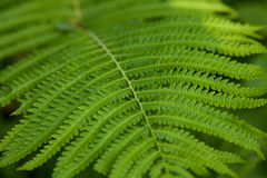 Green fern background Stock Photos