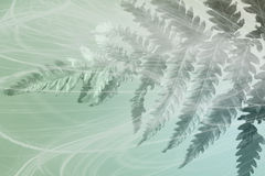 Green Fern Behind Wispy Fabric Stock Image