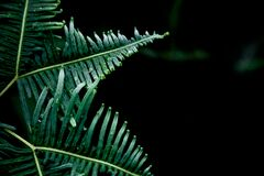 Green fern on black