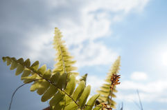 Green fern on the blue sky background Royalty Free Stock Photography