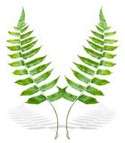 Green fern branch Stock Photos