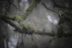 Green Fern on Branch Stock Image