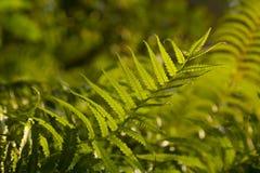 Green fern branch Royalty Free Stock Photos