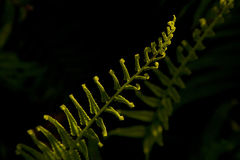 Green fern branch. In sun light Royalty Free Stock Image