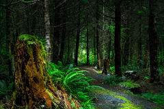 Green Fern Beside Brown Wood Log Beside Gray Path during Daytime Inside Forest Stock Image