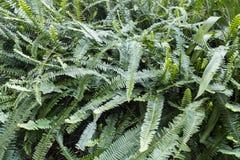 Green fern bush Stock Image