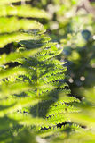 Green fern close up Stock Image