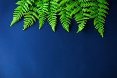 Green fern on dark background stock image