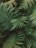 A green fern in a dark forest surrounding royalty free stock photos