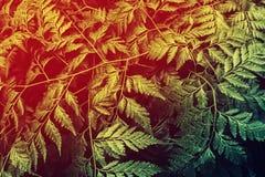 Green fern  foliage natural  pattern   spring ,summer  fresh nat Stock Photography