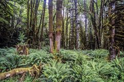 Green fern in forest Stock Images