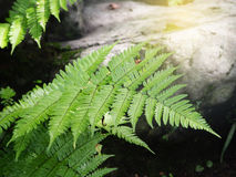 Green fern in the forest Stock Photography