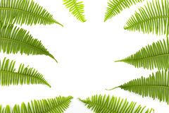 Green fern frame isolated on white background. Royalty Free Stock Images