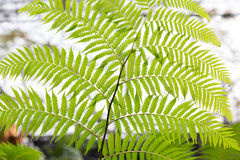 Green fern frond Stock Images