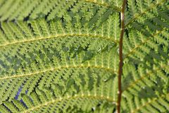 Green fern fronds Stock Image
