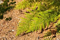 Green fern Stock Photography