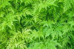 Green fern Stock Photos