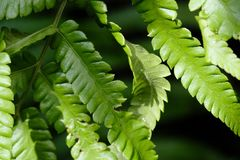 Green fern grows on the wet floor stock photography