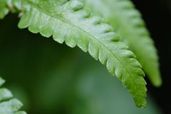 Green fern grows on the wet floor royalty free stock images