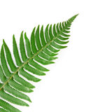Green fern leaf Stock Photos