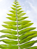 Green fern leaf Royalty Free Stock Photo