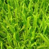green fern leaf Royalty Free Stock Photos