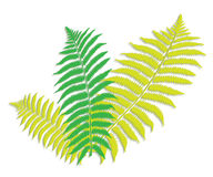 Green fern leaf. An image showing three green and white color fern leaves with a shadow behind on a white background Royalty Free Stock Photos