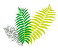 Green fern leaf. An image showing three green and white color fern leaves on a white background with one of the fern leaves shown in outline Stock Photography
