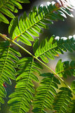 Green fern leaf Stock Image