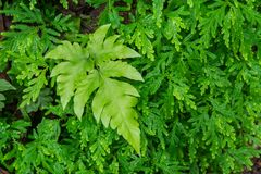 Green fern leaf. Pattern background Royalty Free Stock Photography