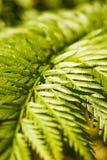 Green fern leaf Stock Image