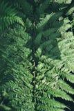 Green fern leaf, nature background, dark emerald green, nature background, tropical greenery Stock Photo