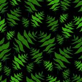 Green fern leaf seamless wild forest pattern black background. Decorative plant background. Vector hand drawing doodle herb card.r Royalty Free Stock Images