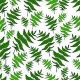 Green fern leaf seamless wild forest pattern white background. Decorative plant background. Vector hand drawing doodle herb card Stock Photos
