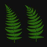Green Fern Leaf Set. On Dark Background. Vector Illustration Stock Photos