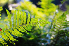 Green fern leaf Stock Photo