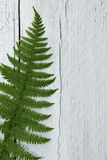Green fern leaf on textured white wood Stock Photo