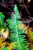Green fern leaf in the tropical rainforest Stock Photos