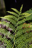 Green fern leaf in the woods Royalty Free Stock Photos
