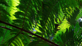 Green fern leafs Royalty Free Stock Photos
