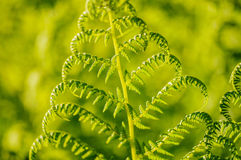 Green fern leafs with defocused vibrant background Stock Images
