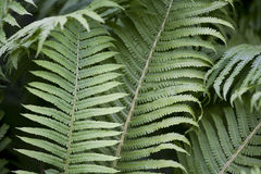 Green fern leafs floral background Stock Photography