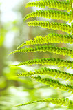Green Fern Leave Stock Photos